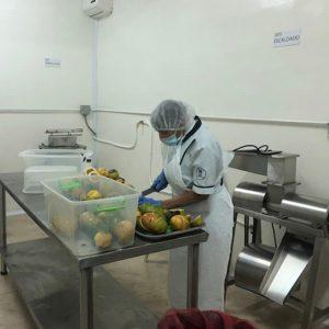 Producción de alimentación